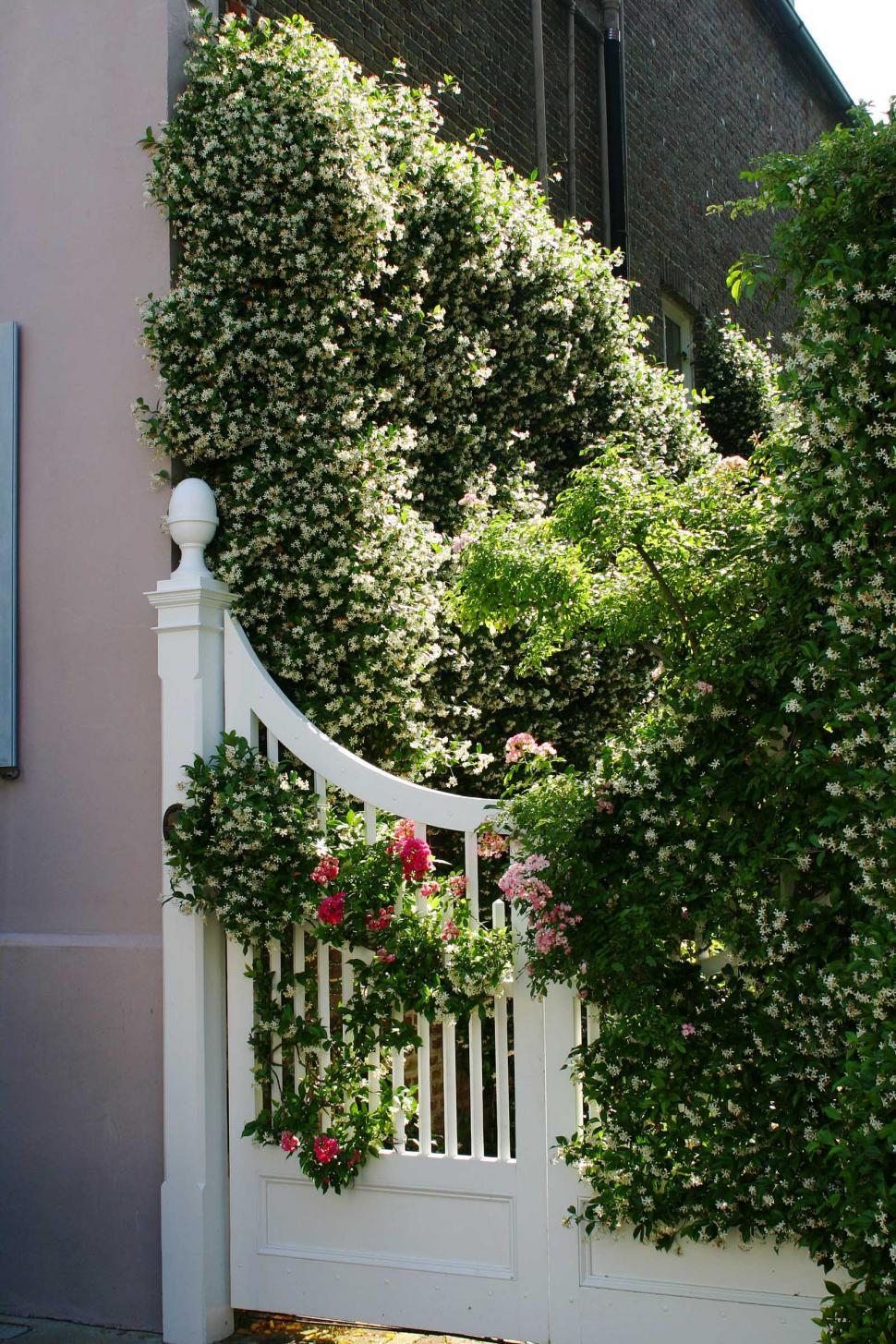 Download Free Stock HD Photo of vines and gate Online