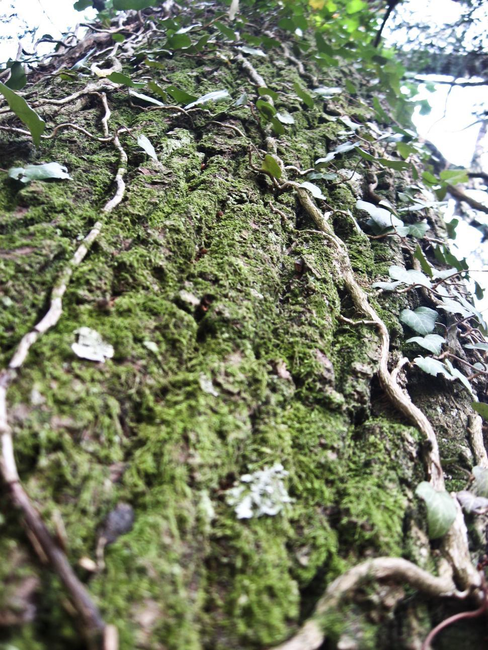 Download Free Stock HD Photo of mossy tree Online