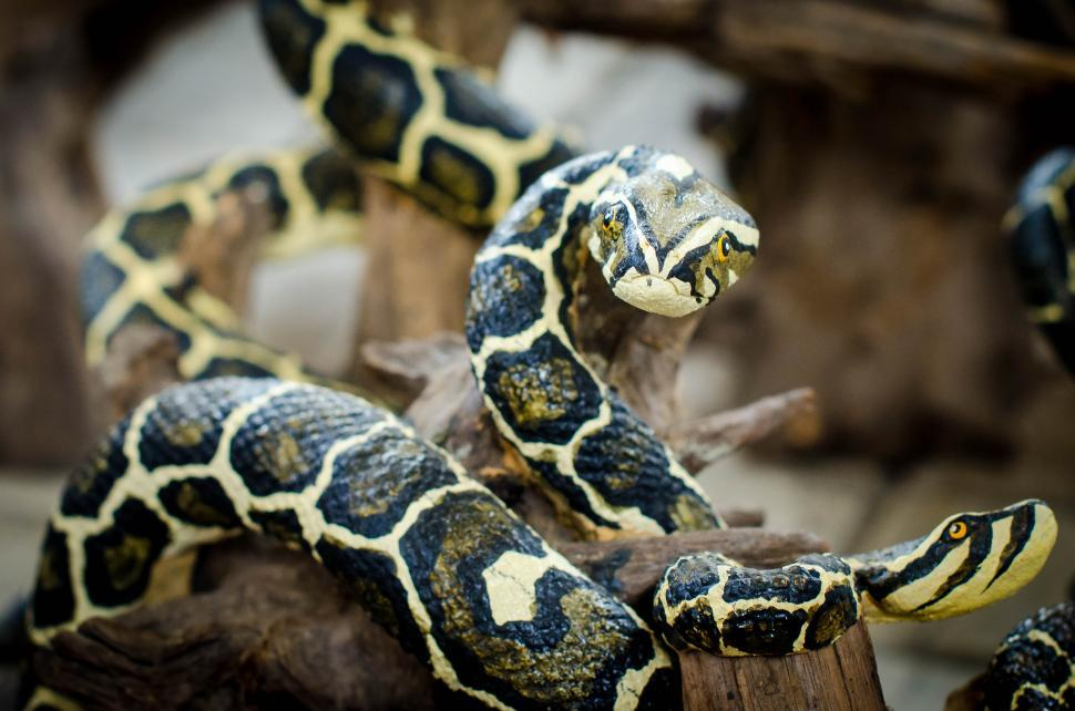 Download Free Stock HD Photo of Animal molded figure - fake snake Online
