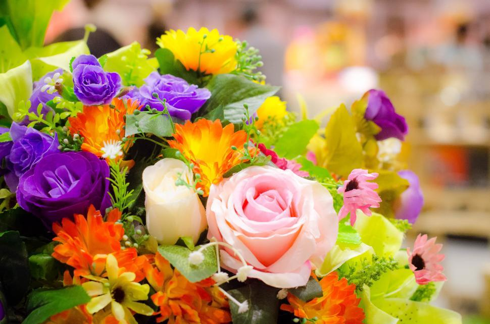 Download Free Stock HD Photo of Many Colorful Flowers on display Online