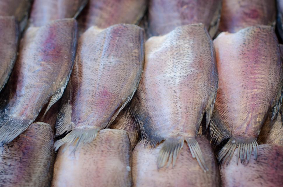 Download Free Stock HD Photo of Fried fish in display Online