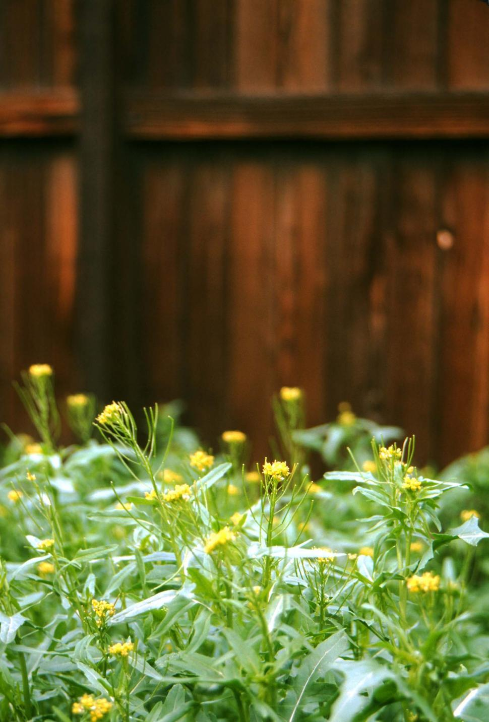 Download Free Stock HD Photo of Weeds and wooden fence Online