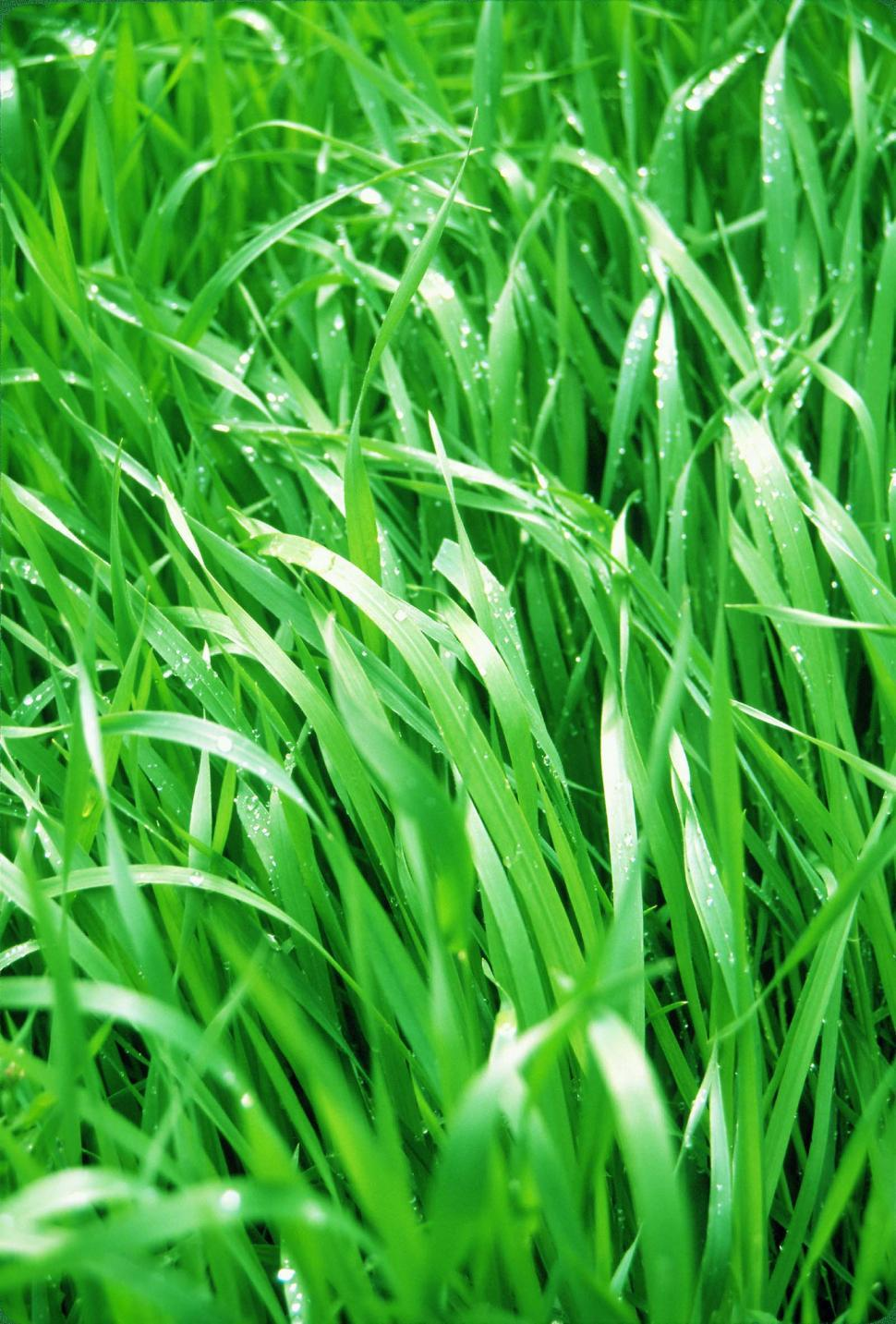 Download Free Stock HD Photo of Organic grass background Online