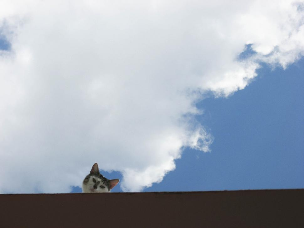 Free image of cat looking off the edge of the roof