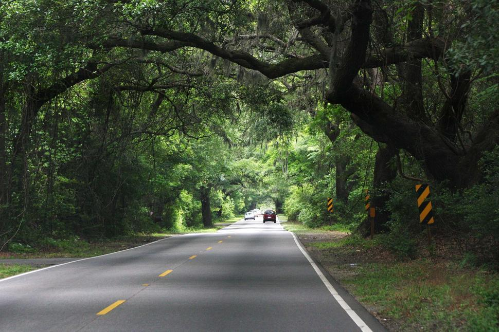 Free image of more empty road with oak trees