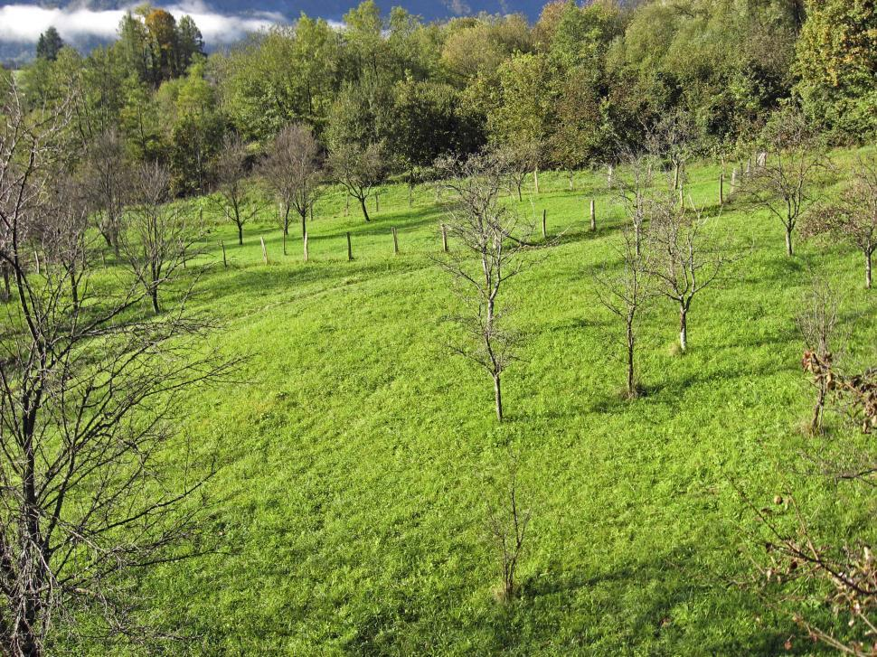 Download Free Stock HD Photo of green meadow Online