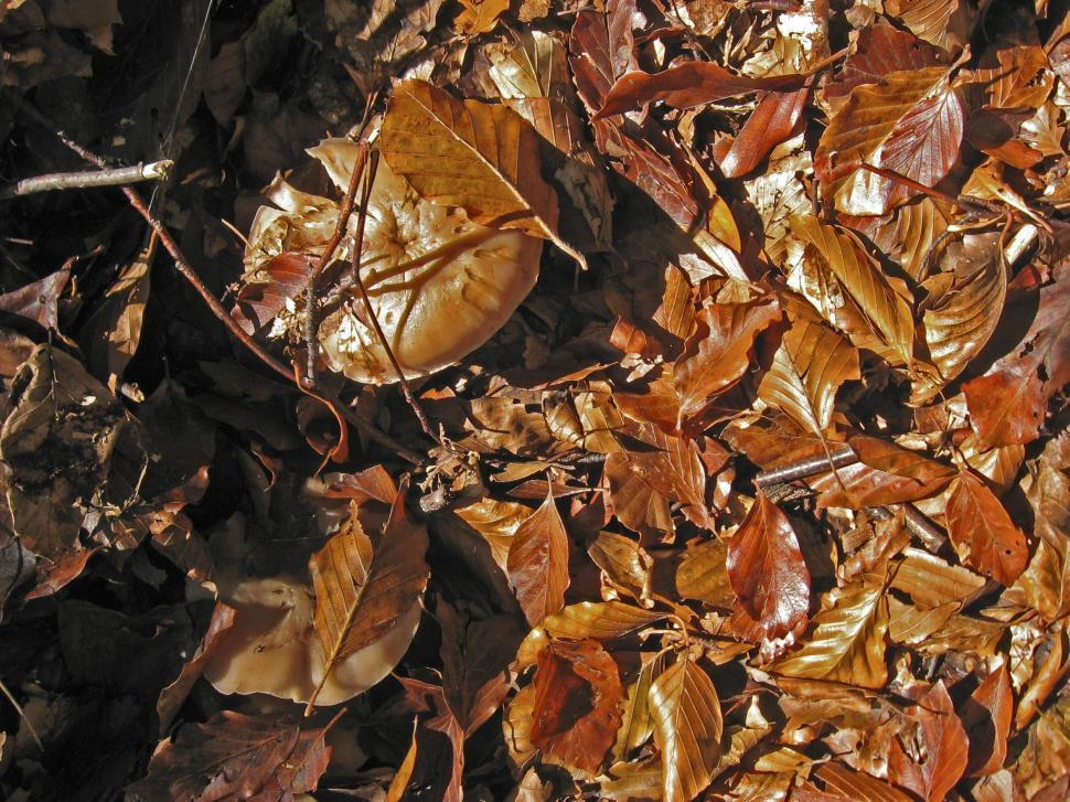 Download Free Stock HD Photo of Fallen leaves Online