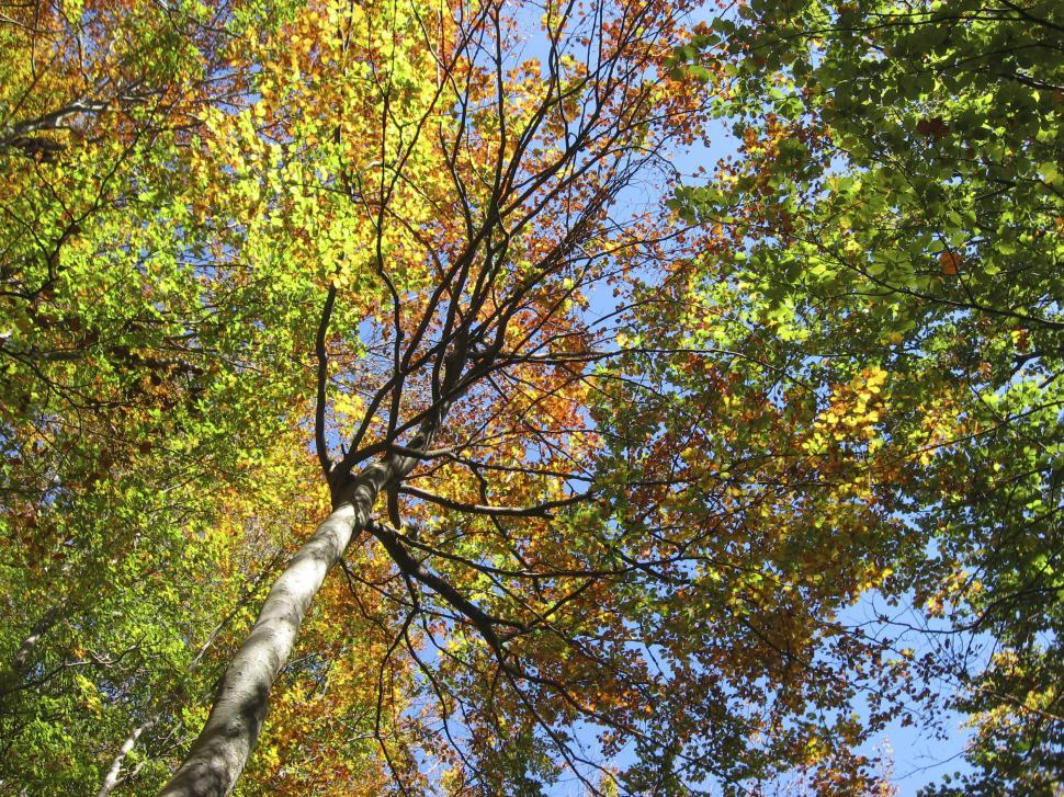 Download Free Stock HD Photo of Tree color Online