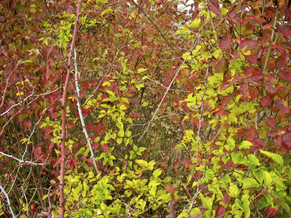 Download Free Stock HD Photo of trees with red and green leaves Online