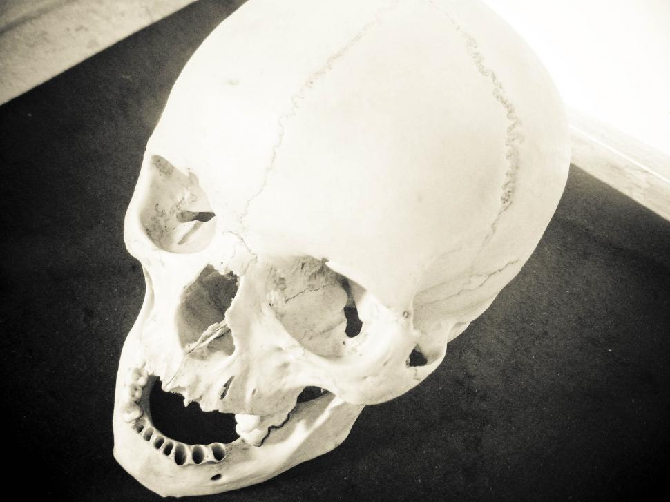 Free image of black and white human skull