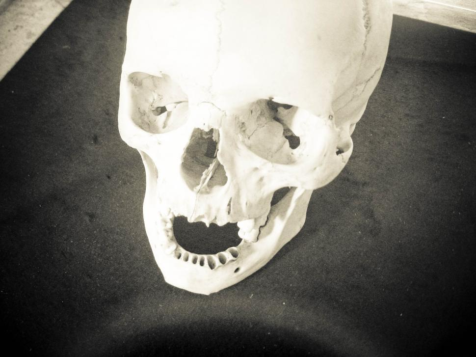 Download Free Stock HD Photo of skull on a table Online