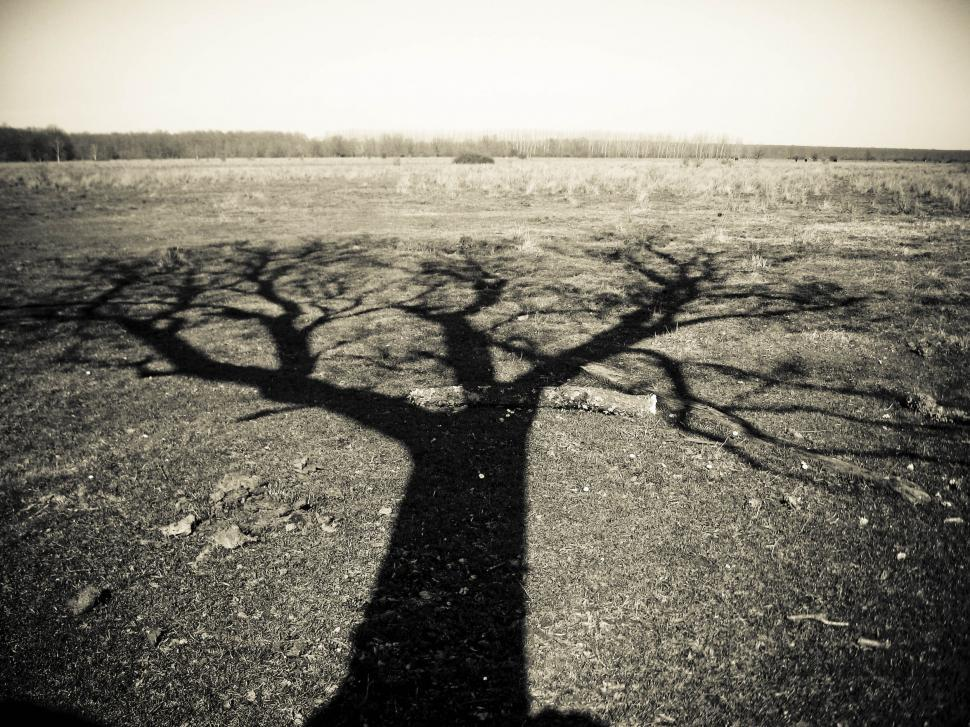 Download Free Stock HD Photo of lonely tree shadow Online
