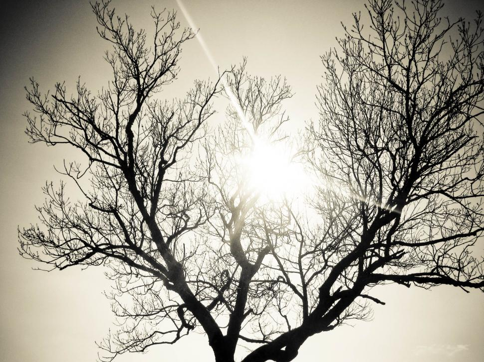 Download Free Stock HD Photo of lonely tree and sun Online