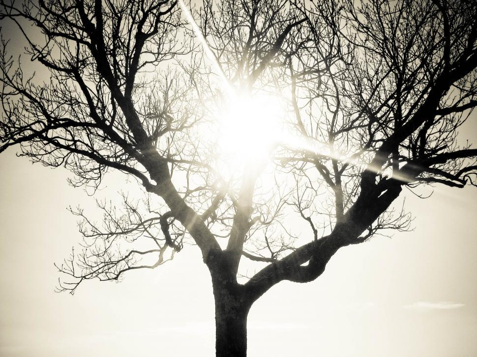 Download Free Stock HD Photo of lonely tree with sun Online