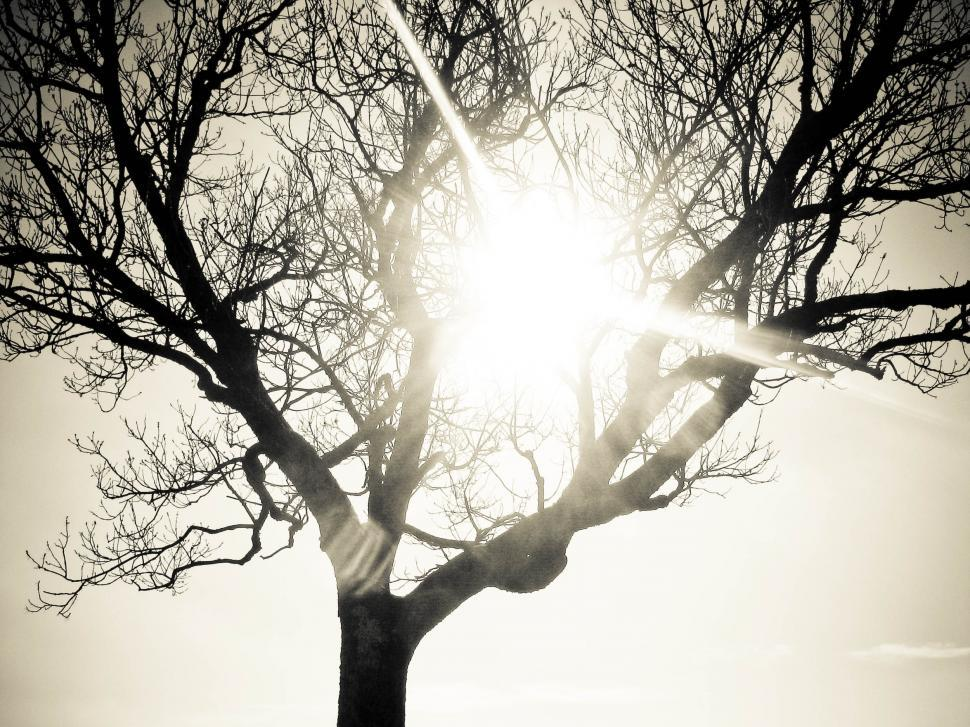 Download Free Stock HD Photo of lonely tree bright sun Online