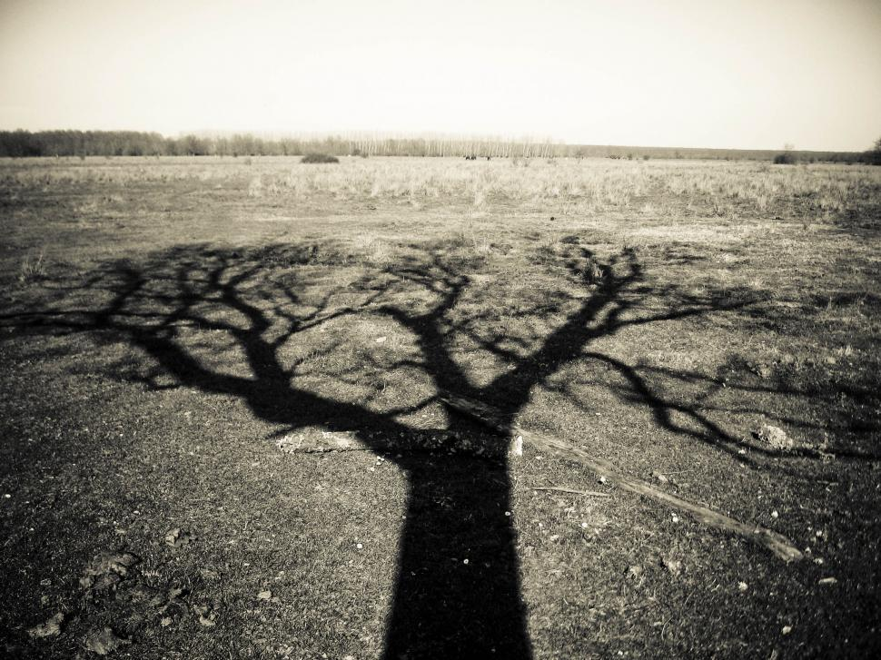Download Free Stock HD Photo of lonely tree Online