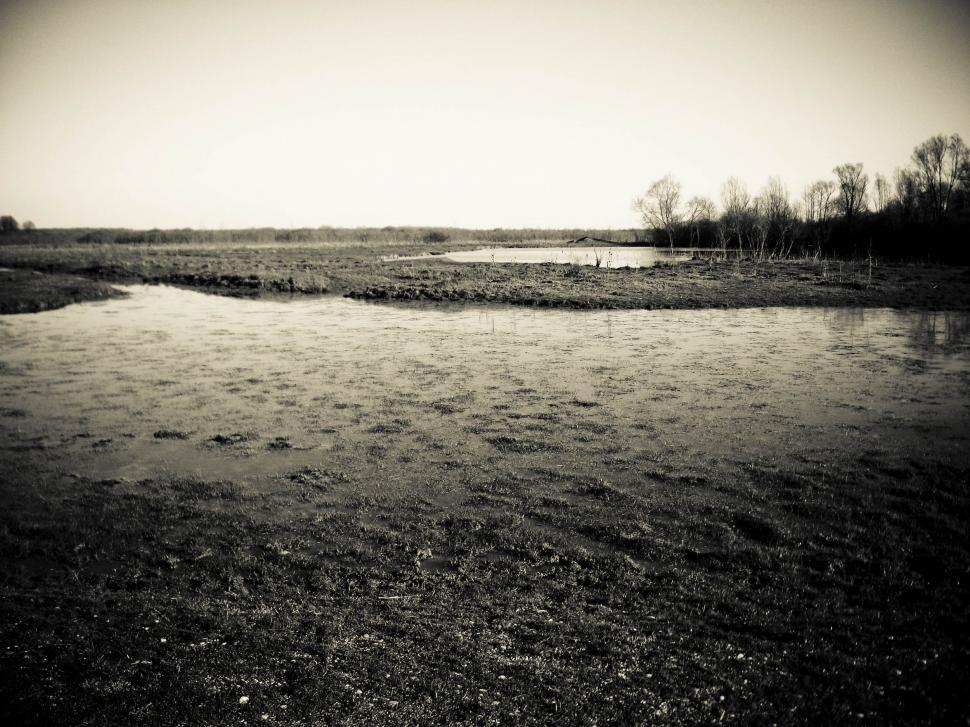 Download Free Stock HD Photo of swamp view Online