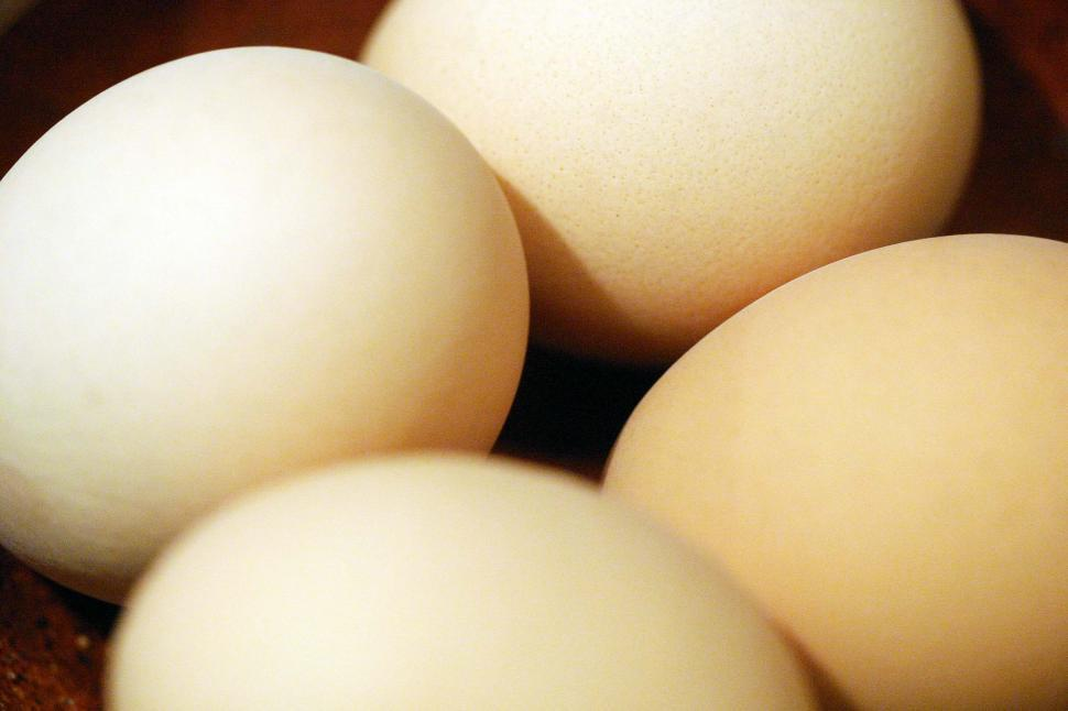 Download Free Stock HD Photo of Eggs in a bowl Online