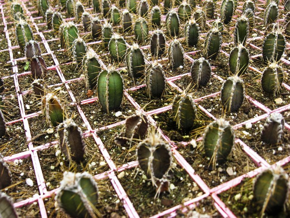 Download Free Stock HD Photo of Cactus grid Online