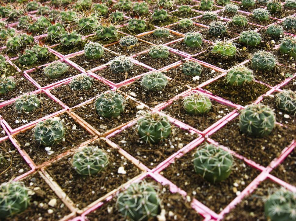 Download Free Stock HD Photo of Small cacti Online