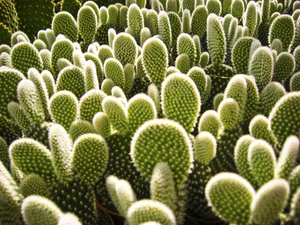 Download Free Stock HD Photo of Cactus pads Online