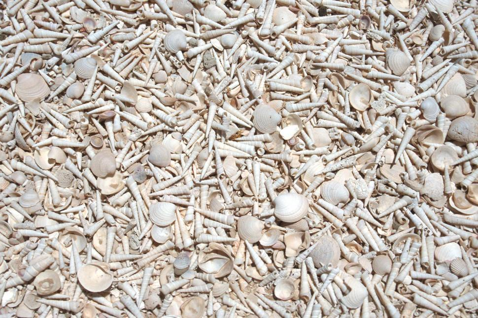 Download Free Stock HD Photo of Bleached shells background Online