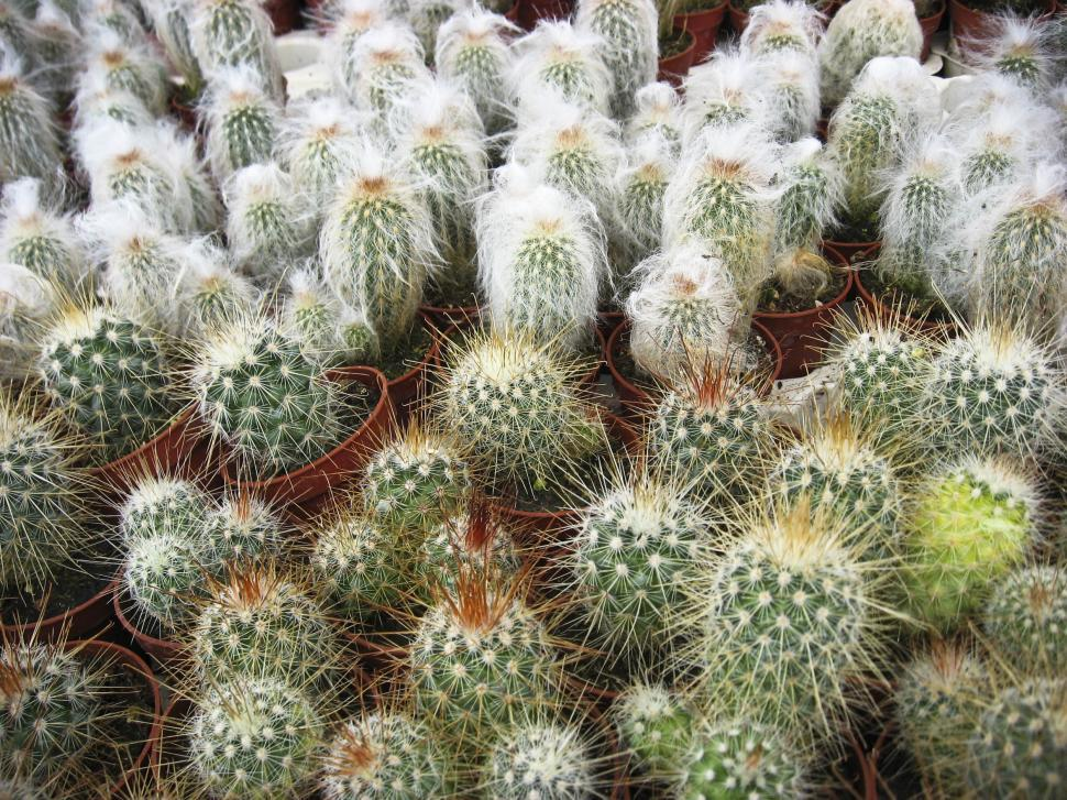 Download Free Stock HD Photo of Variety of cactus plants Online