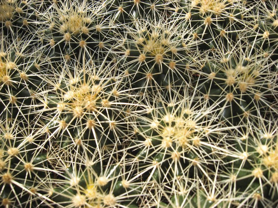 Download Free Stock HD Photo of cactus needles Online