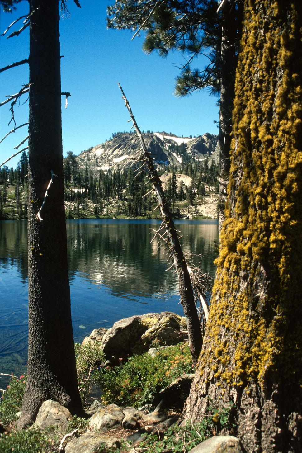 Download Free Stock HD Photo of Mountain lake and trees Online