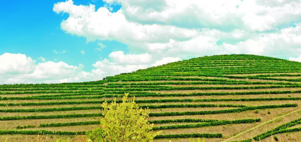 Download Free Stock HD Photo of Vineyard - Douro Valley Online