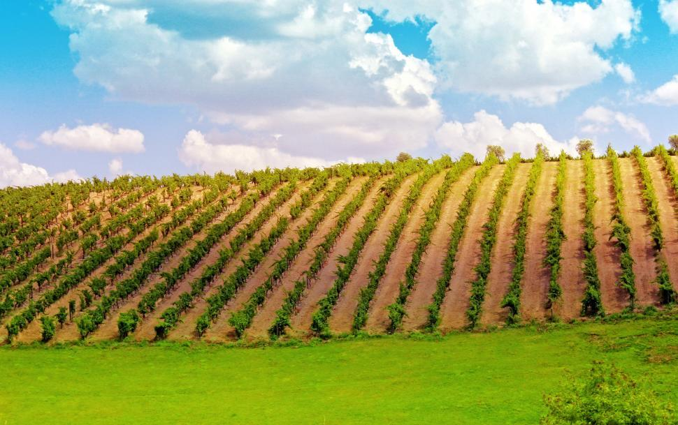 Download Free Stock HD Photo of Vineyard in the Douro Valley - Port Wine Online