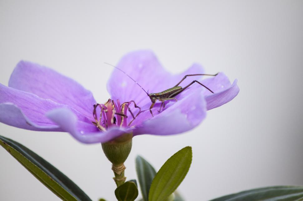 Download Free Stock HD Photo of Grass Hopper on Purple Flower Online