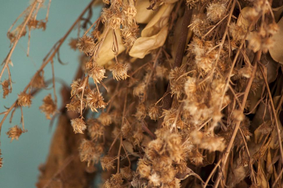 Download Free Stock HD Photo of Dried plants Online