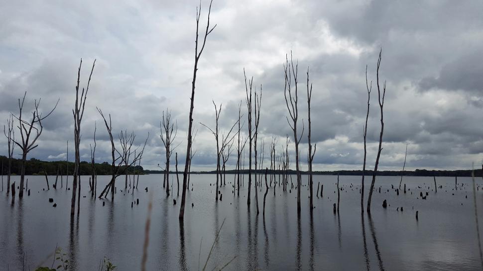 Download Free Stock HD Photo of Manasquan Reservoir Online