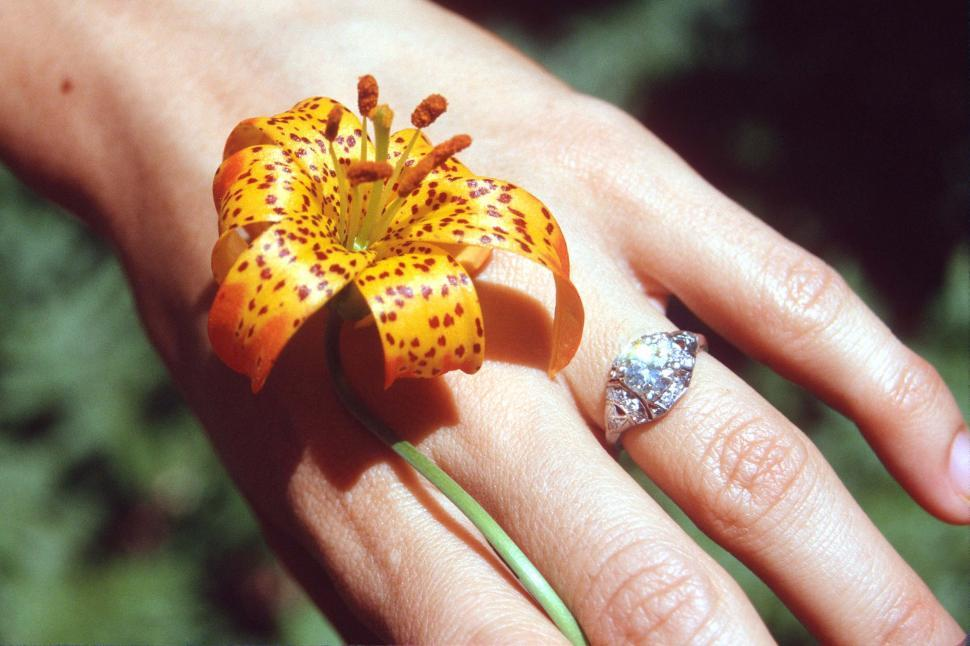 Download Free Stock HD Photo of Tiger Lily and Wedding Ring Online