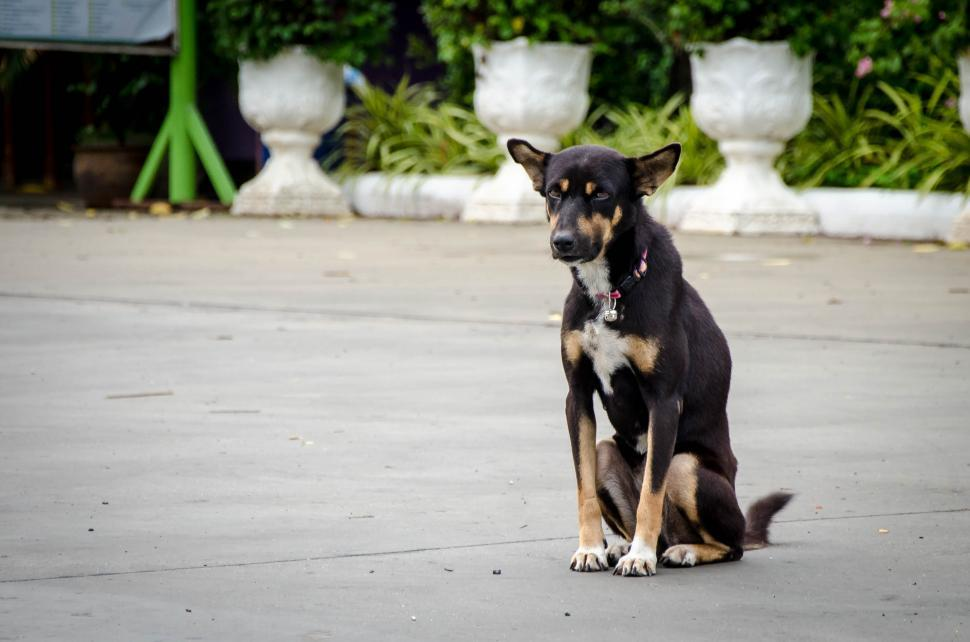 Download Free Stock HD Photo of Dog in Temple  Online