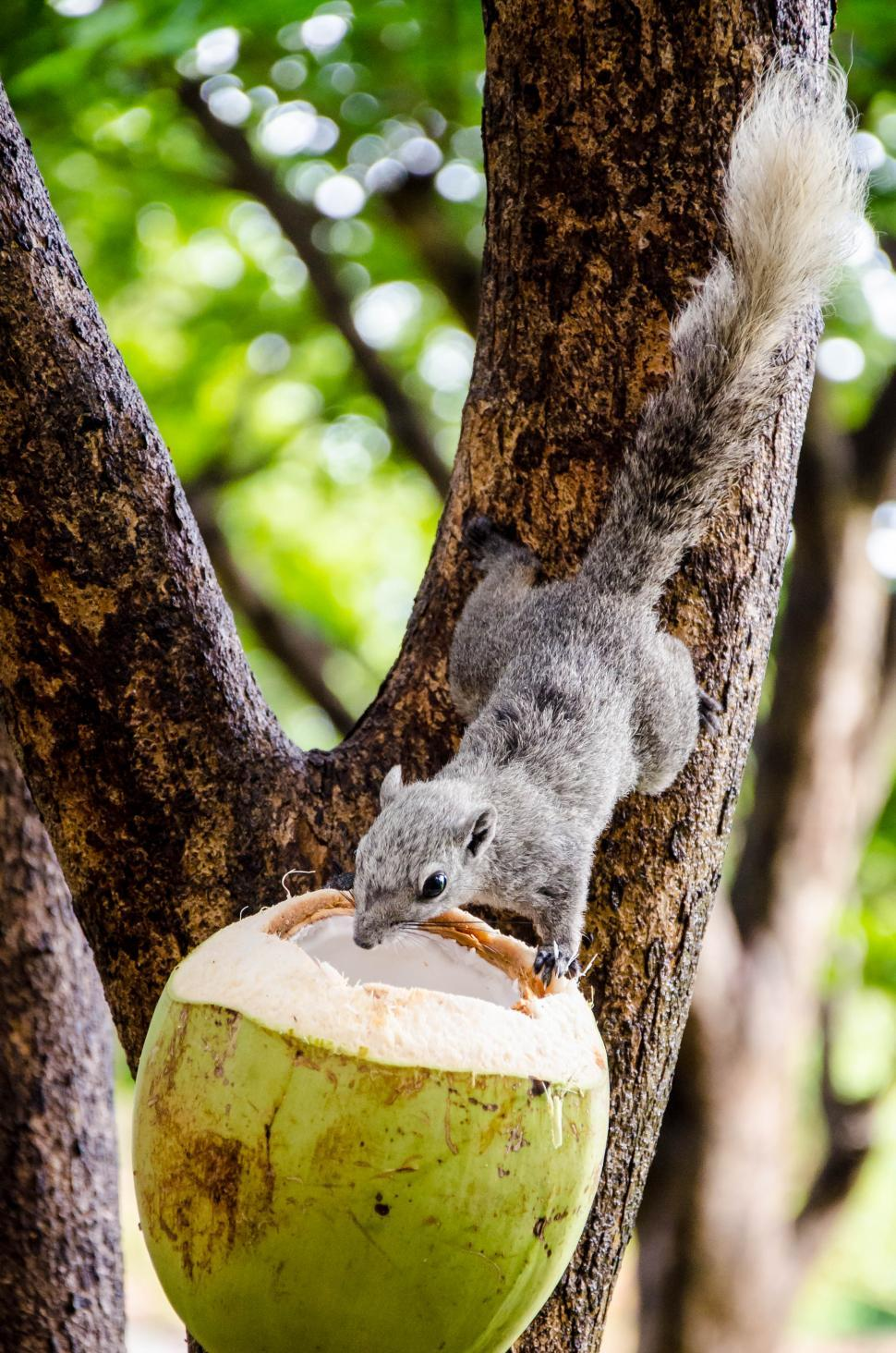 Download Free Stock HD Photo of Feeding Squirrel  Online