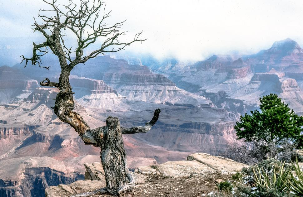 Download Free Stock HD Photo of Grand Canyon Tree Online