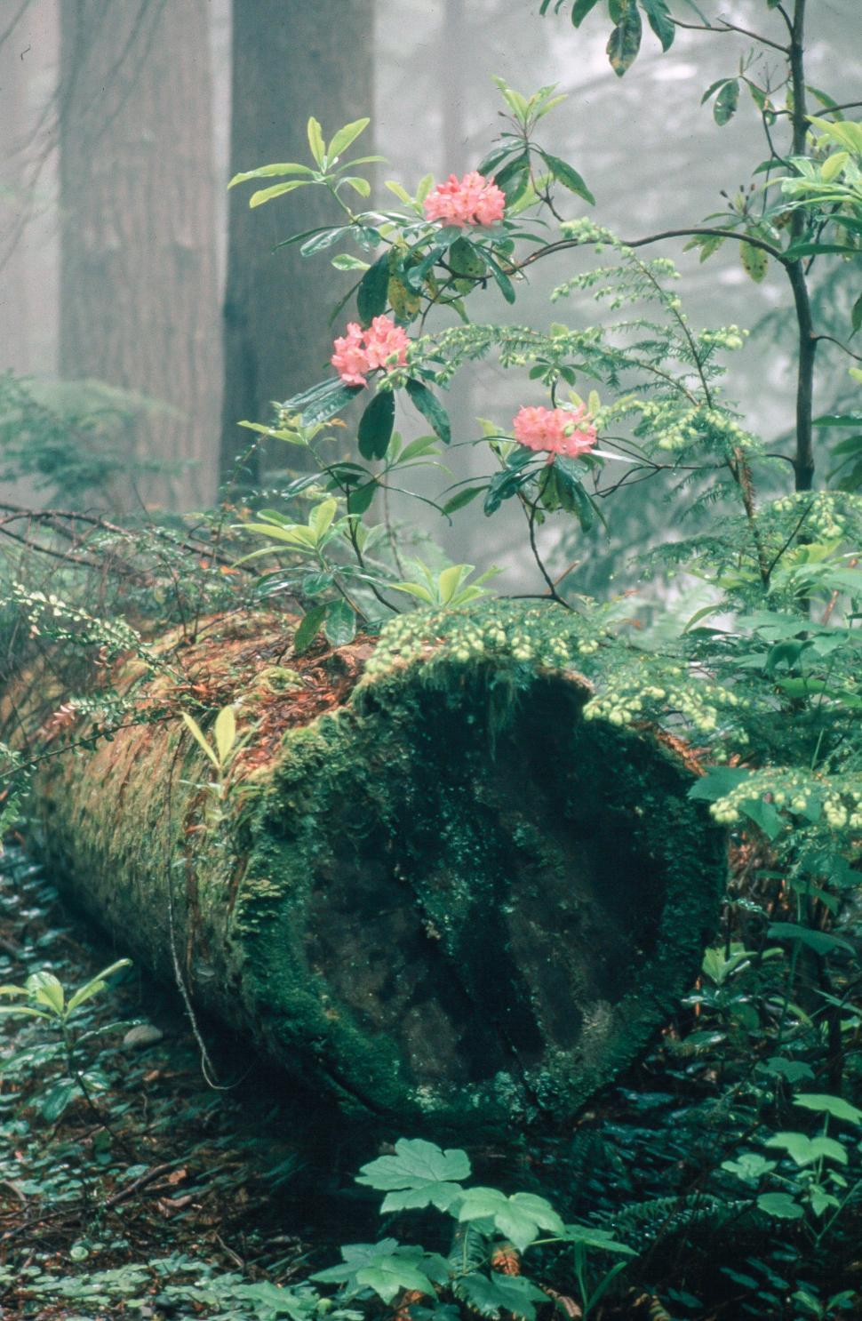 Download Free Stock HD Photo of Rhododendron Flowers in forest floor Online