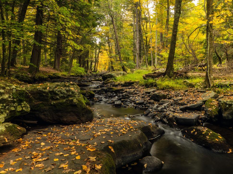 Download Free Stock HD Photo of Autumn leaves fall on Brook Online