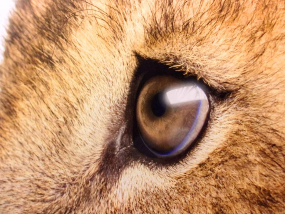Download Free Stock HD Photo of Lion s Sad Eyes - Close-Up Online