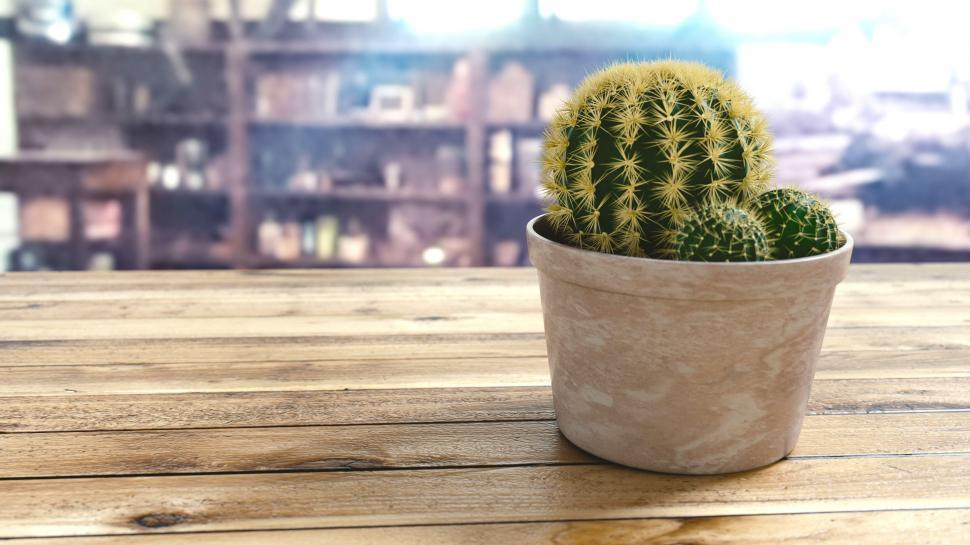 Download Free Stock HD Photo of Cactus Pot Online