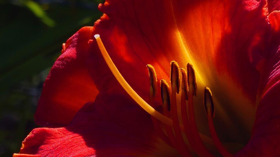 Download Free Stock HD Photo of Day Lily Flower Parts Macro Online