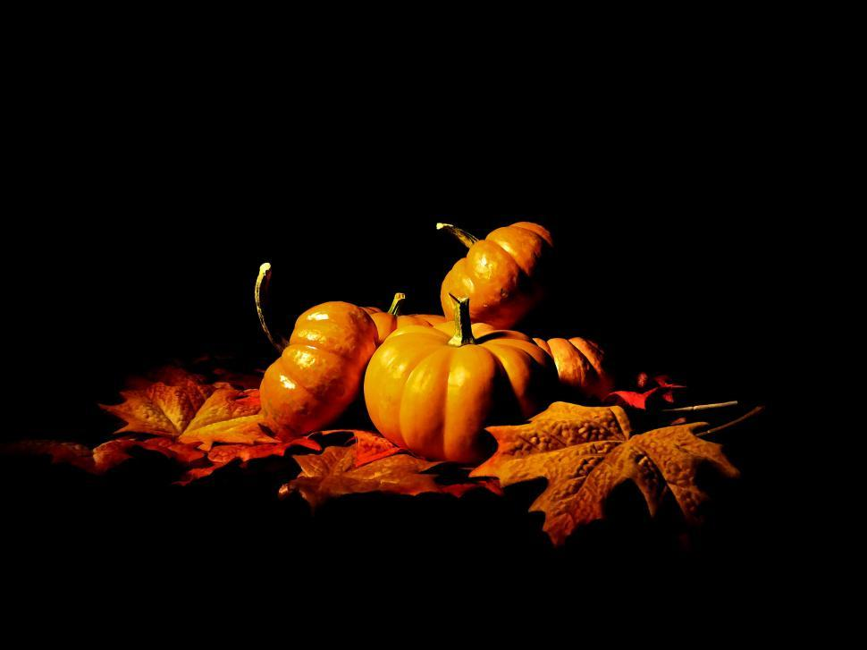 Download Free Stock HD Photo of Gourds on Black Online