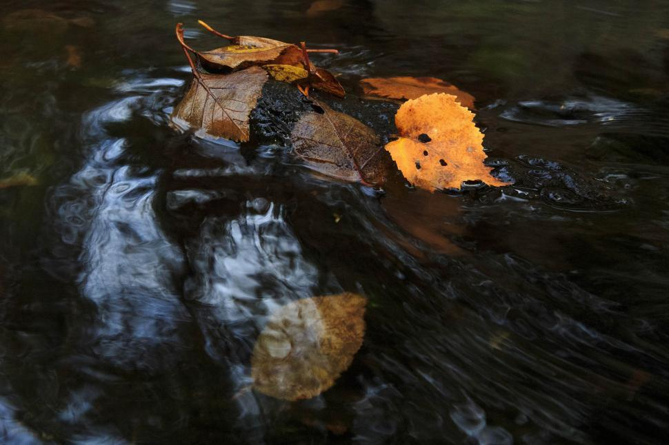 Download Free Stock HD Photo of Leaves in stream Online