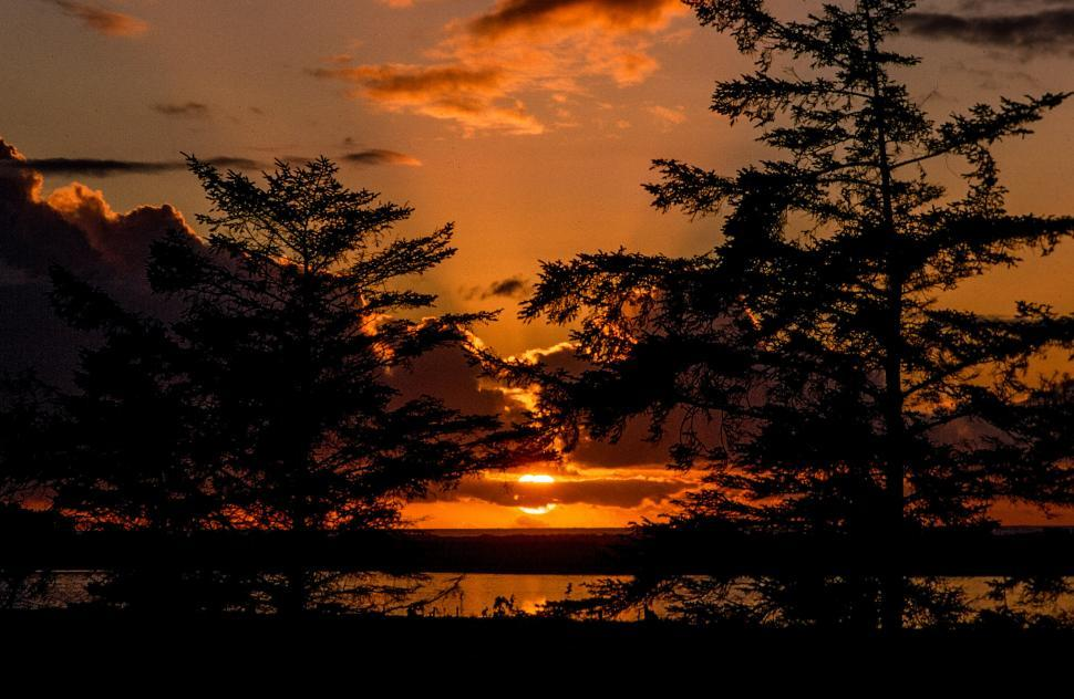 Free image of Silhouette of trees during sunset