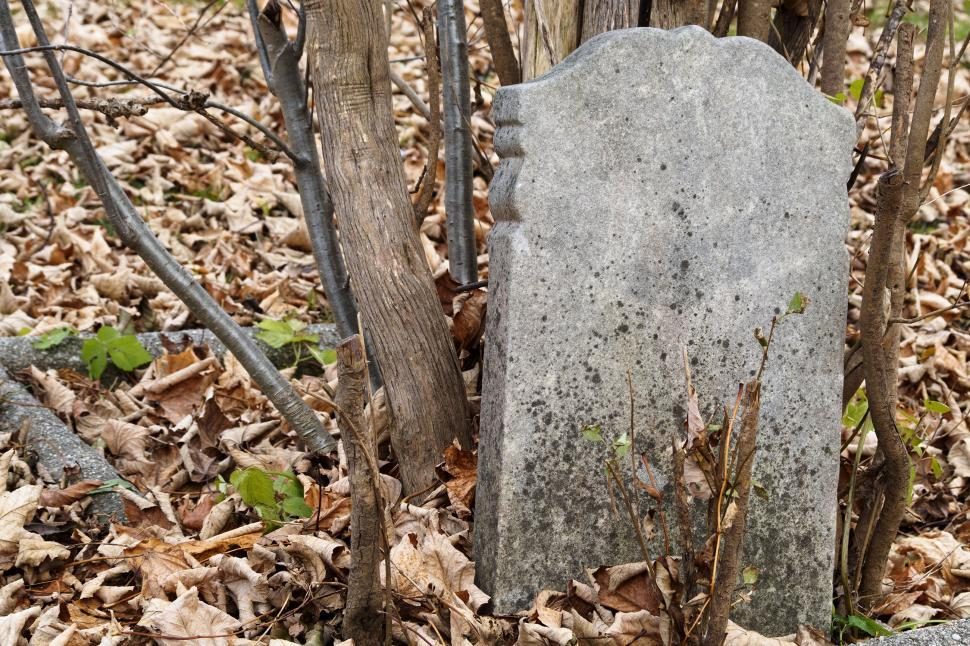 Download Free Stock HD Photo of Gravestone and trees Online