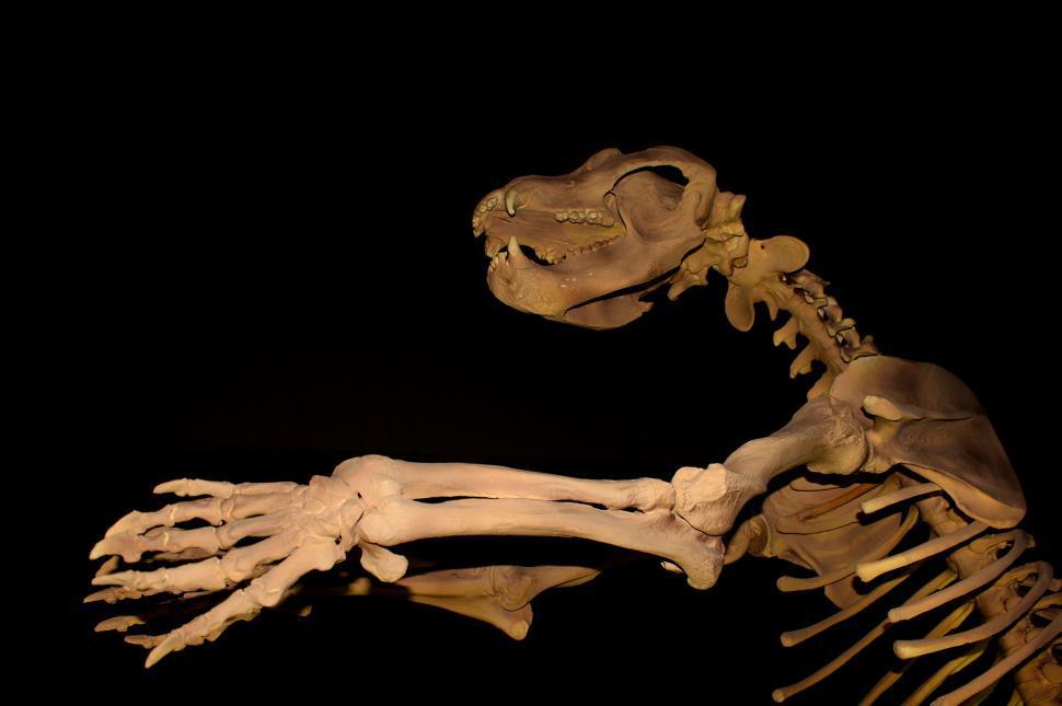 Download Free Stock HD Photo of Giant Cave Bear - Extinct Megafauna Online
