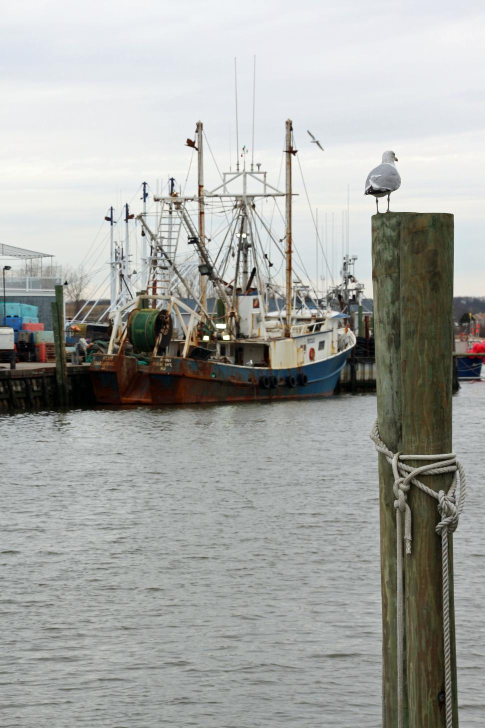 Download Free Stock HD Photo of Commercial Fishing Boats and Seagull Online