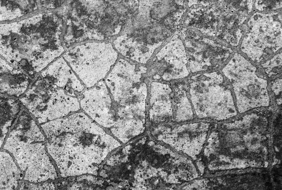 Download Free Stock HD Photo of Cracked Concrete Texture  Online